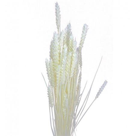 Trigo seco blanco