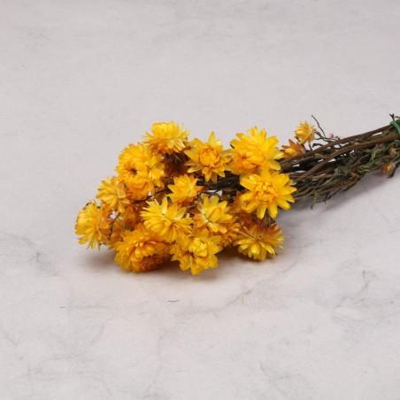 Helichrysum seco amarillo