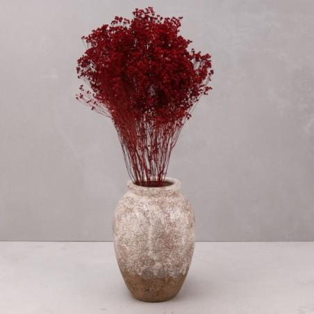Broom bloom seco rojo