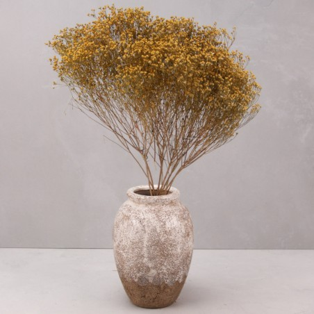 Broom bloom seco natural