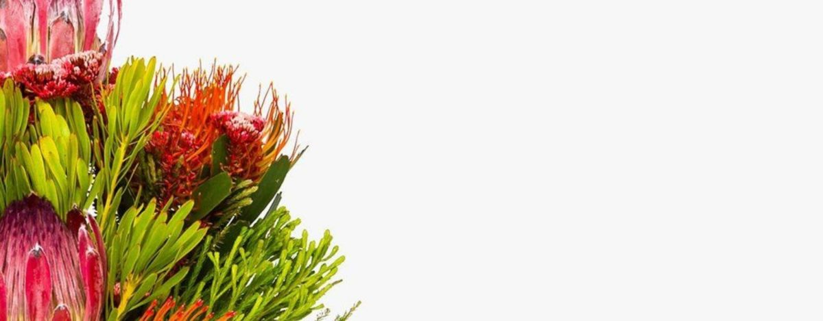 flores originales y coloridas para decorar