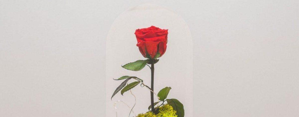 ¿Qué es una flor preservada y cómo se hace?