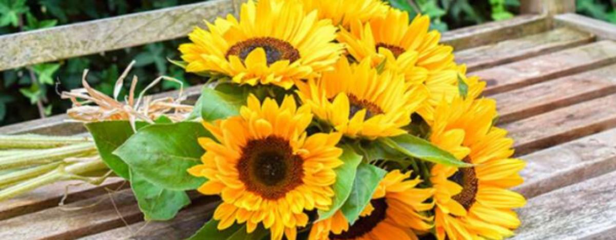 regala flores amarillas